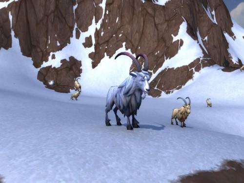 Guía Duelo de Mascota: Kafi (Domador pandaren de fábula)